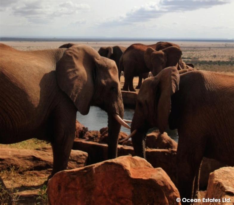 Simba_Village_safari_028