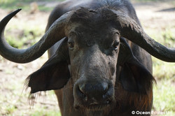 Simba_Village_safari_031