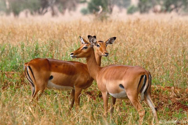 Simba_Village safari 013_marked