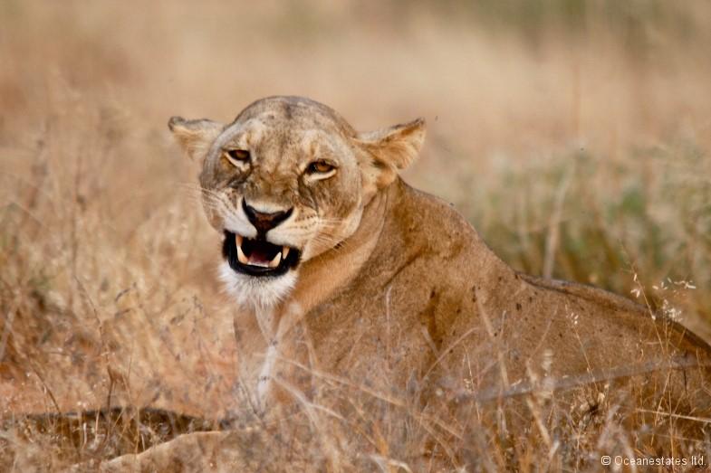 Simba_Village safari 006_marked