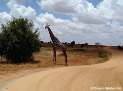 Simba_Village_safari_025