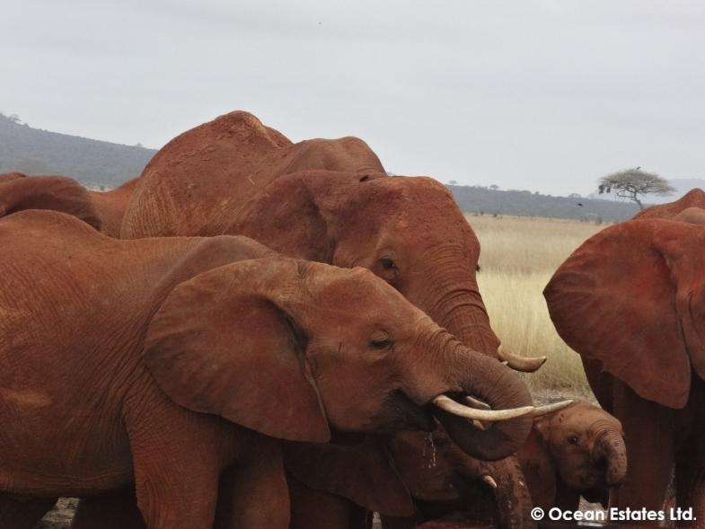 Simba_Village_safari_029
