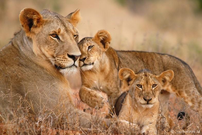 Simba_Village safari 007_marked