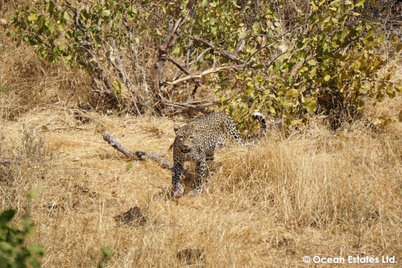 Simba_Village_safari_015