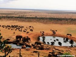 Simba_Village_safari_027