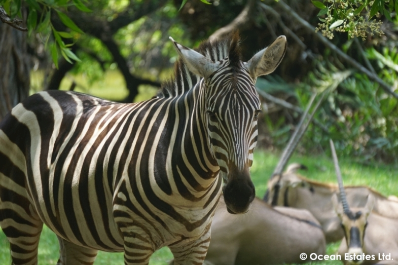 Simba_Village_safari_036
