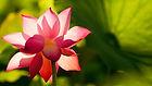 flower-3519828_1920.jpg