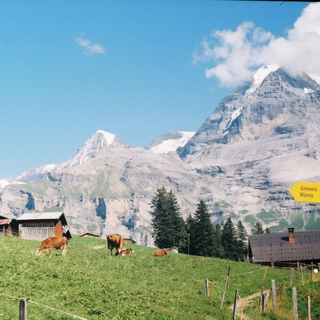 Revenge of the Cows: Hiking Switzerland's Alpine Pass Route