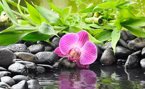 140299__orchid-orchid-flower-stone-black
