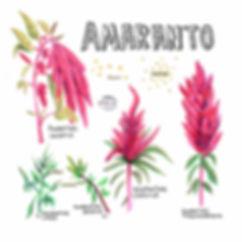 P16_abreamaranto_m.jpg