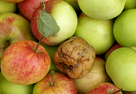 One Bad Apple Can Disrupt Your Team – Be Ready and Able to Respond with Written Documentation