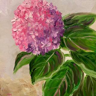 Pink Hydrangea