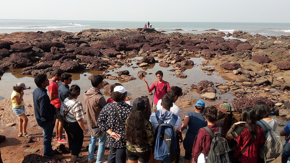 Inter-tidal walk lead by subject expert.
