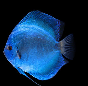 Tropical fish in Stockton , Fish tanks or aquariums in Stockton
