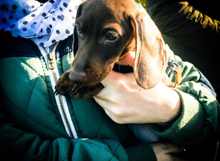 Warwickshire Dachshunds Day Out