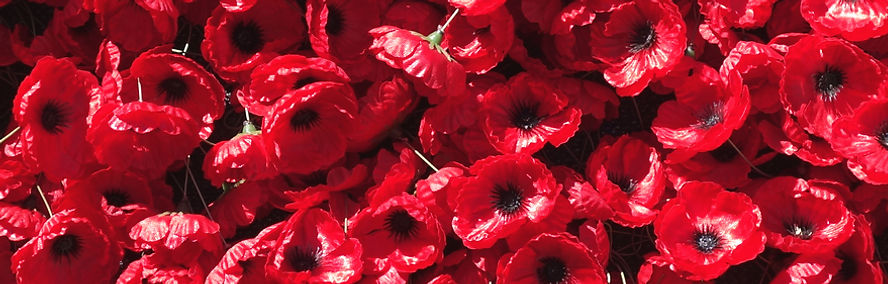 Ornamental Red Poppies of Remembrance.jp