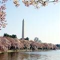 Website Cherry Blossom.jpg