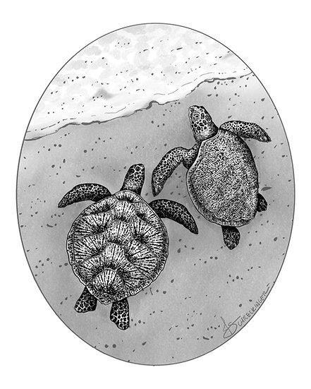 Exclusive Sea Turtle Art
