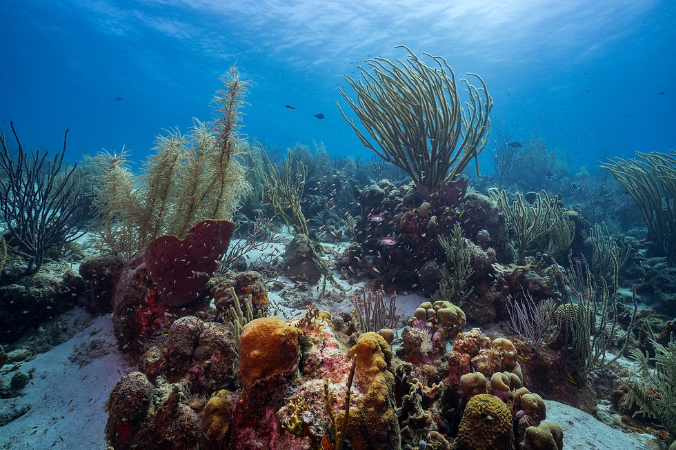 BPH_Curacao_19-11.jpg