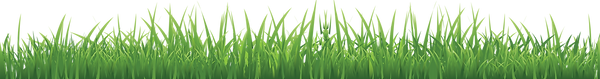 grass_PNG10854.png