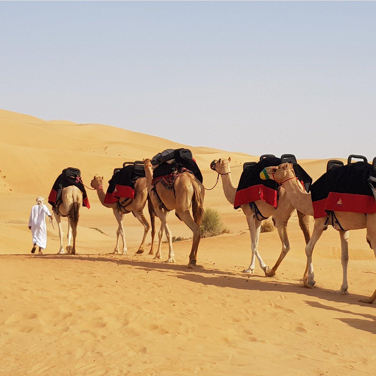 Camel_Trekking-1-large