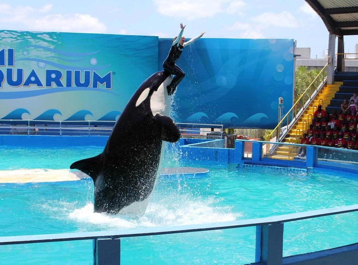 Miami Seaquarium 9