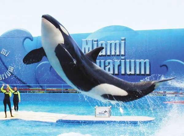 Miami Seaquarium 3