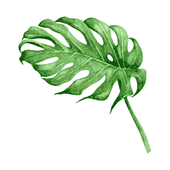 Tropical%20Leaves%208_edited.png