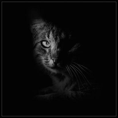 Mon chat_