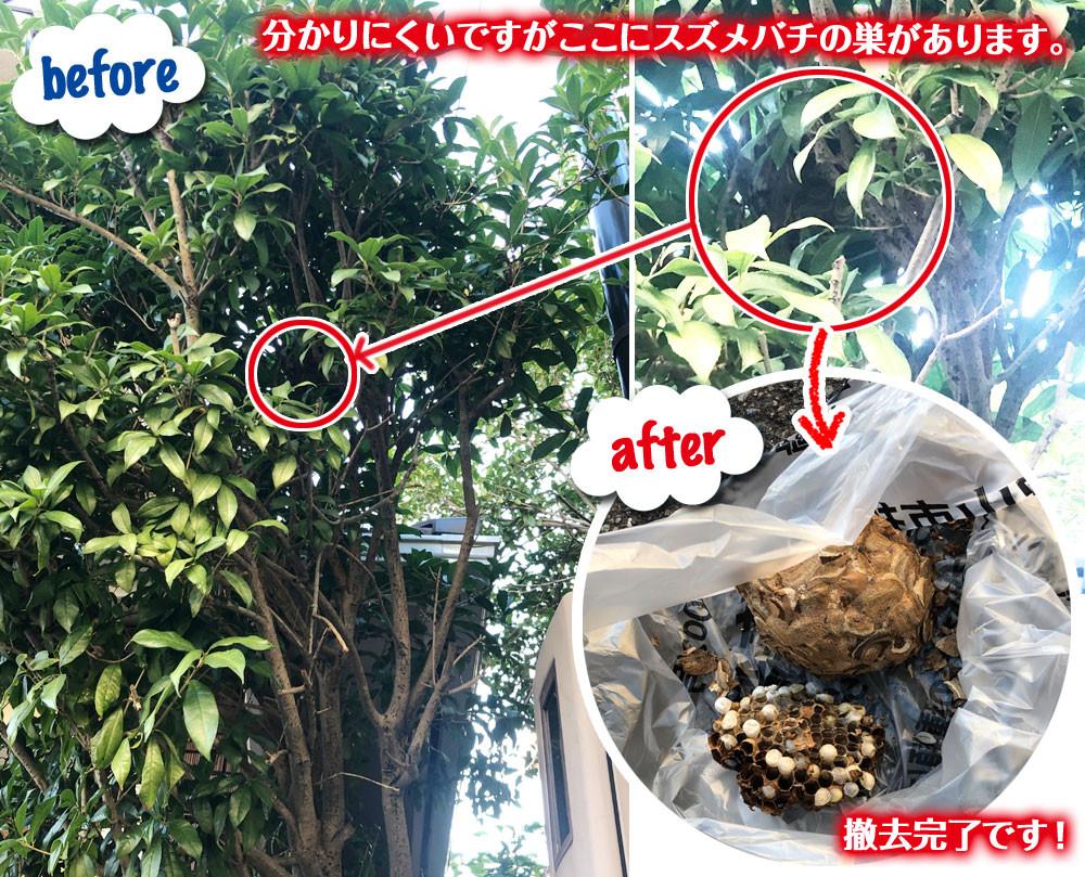 便利屋和歌山 和歌山市 ハチの巣駆除 2件目