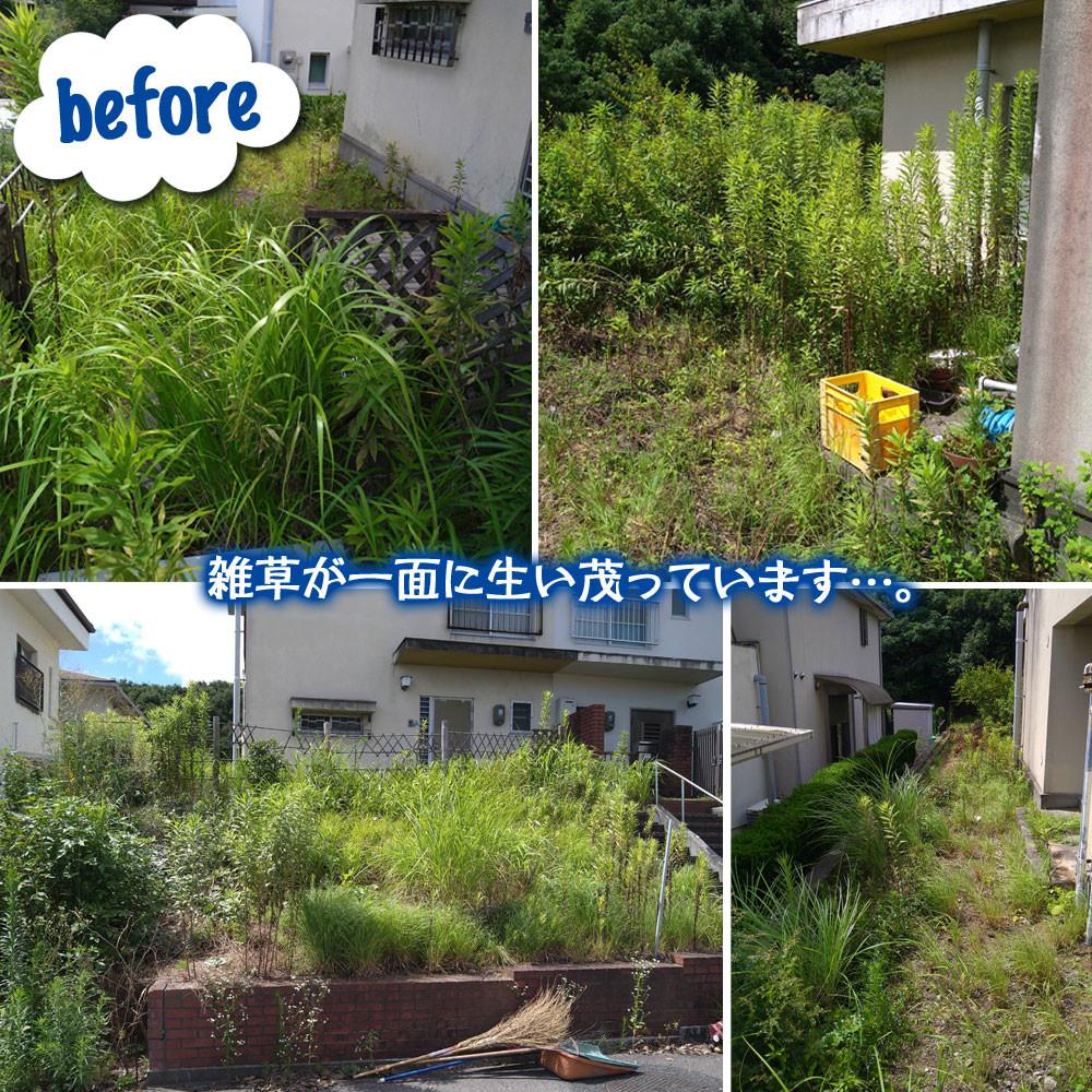 便利屋和歌山 草刈り・除草剤散布作業前
