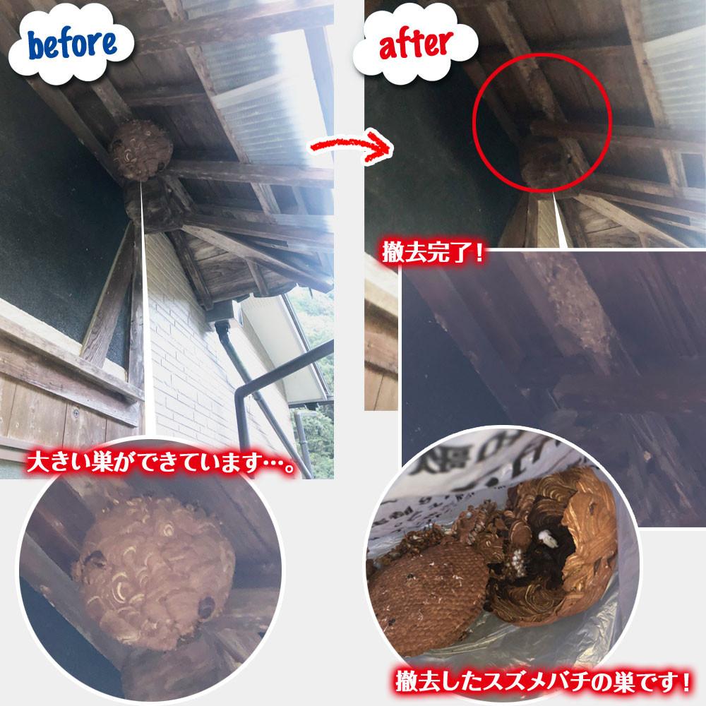 便利屋和歌山 紀ノ川市 ハチの巣駆除 1件目