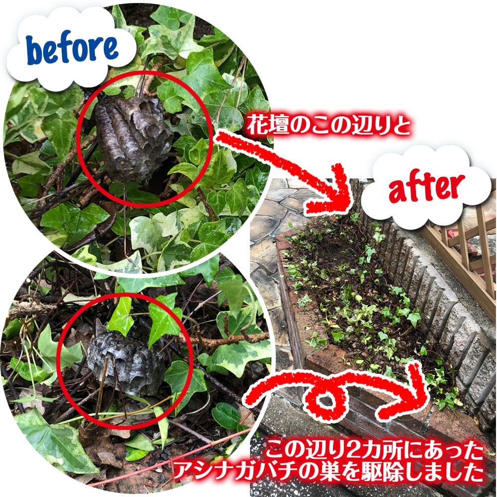 1件目 便利屋和歌山 堺市 アシナガバチの巣駆除