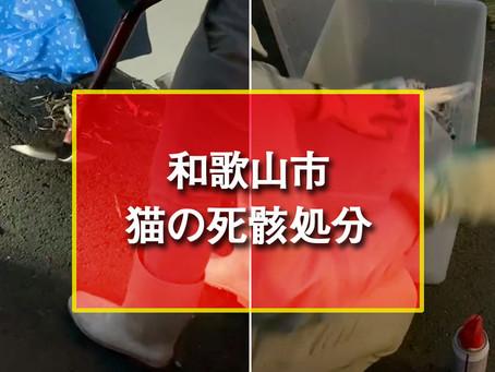 和歌山市 猫の死骸処分
