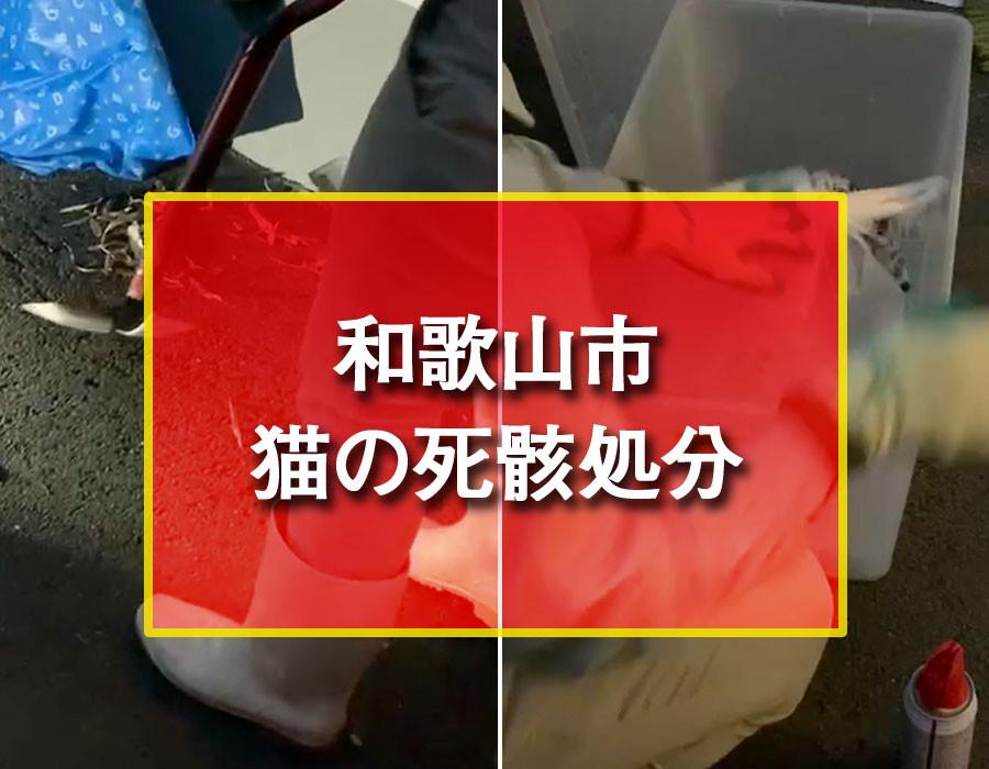 株式会社便利屋和歌山 便利屋和歌山 和歌山市 猫の死骸処分