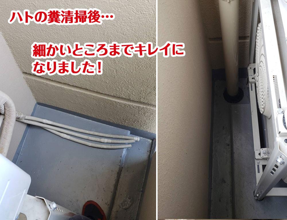 便利屋和歌山 ハトの糞清掃
