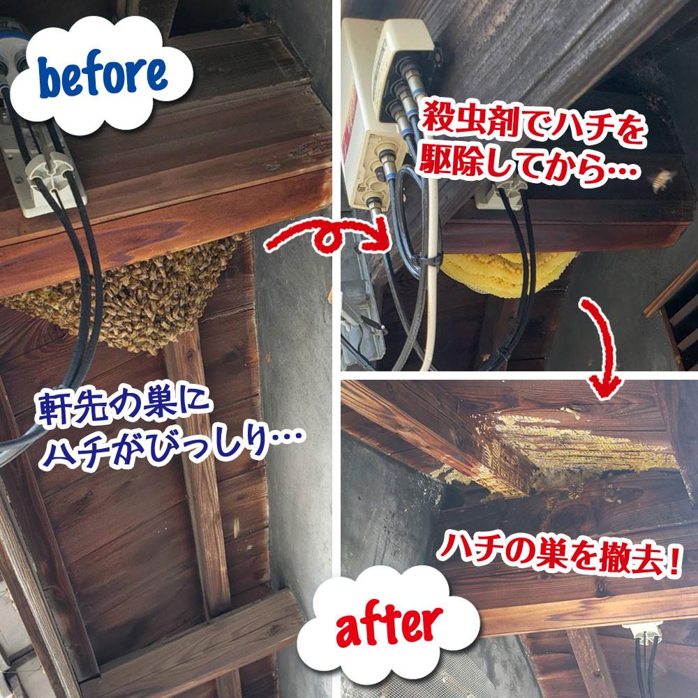 便利屋和歌山 ミツバチの巣撤去