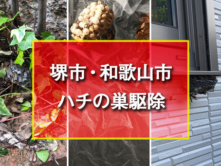 堺市・ 和歌山市 ハチの巣駆除