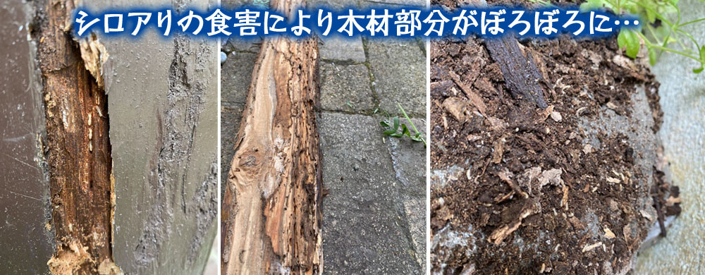 便利屋和歌山 兵庫県 シロアリ駆除消毒作業前