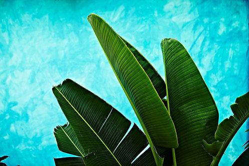 Tropical III
