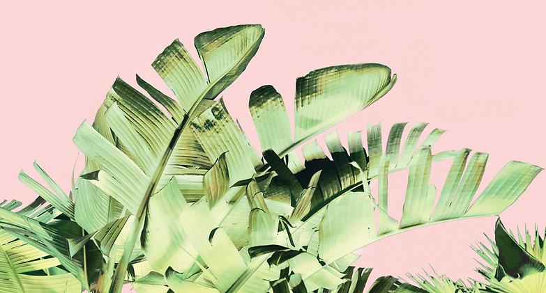 Tropical Velvet III