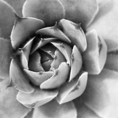 Garden Succulent II