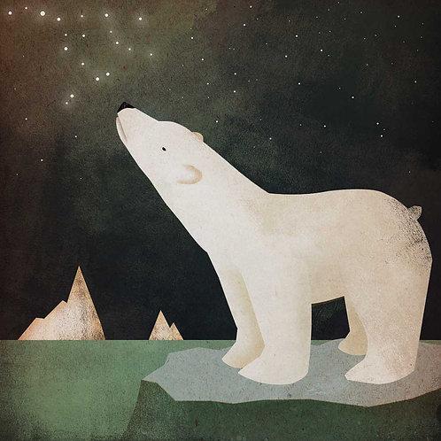 Constellations Polar Bear