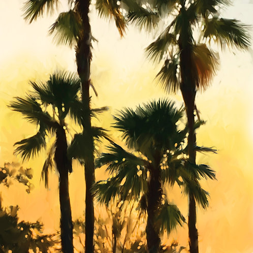 Morning Palm Tree I