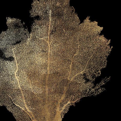 Honey Comb Coral I