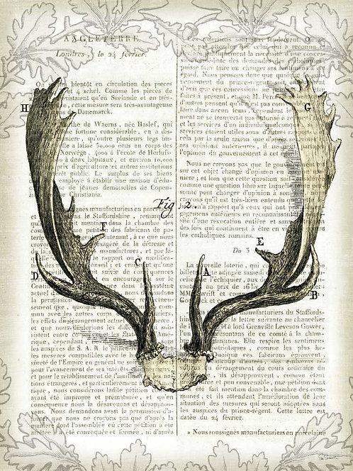 Regal Antlers on Newsprint II