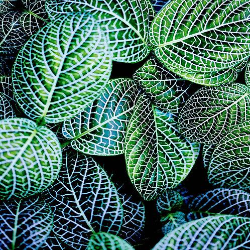 Leaf VIII