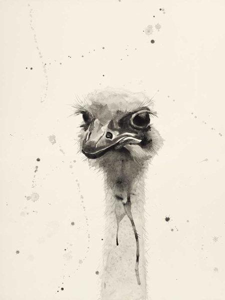 Watercolor Ostrich 2