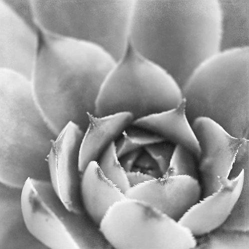 Garden Succulent III