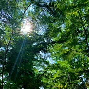 Beautiful Light in World Peace Garden